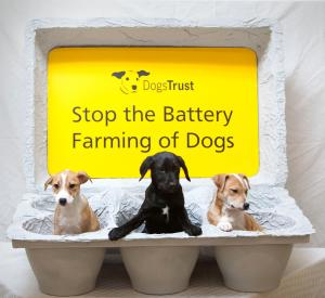 Dogs Trust Ireland Call to Action to shut down unscrupulous puppy farmers.