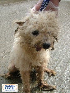 Photo taken by the Dublin SPCA at a puppy farm where over 70 animals were removed