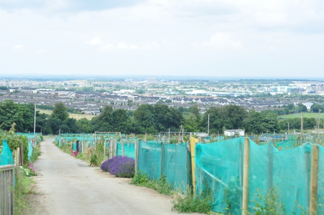 Allotment (21)