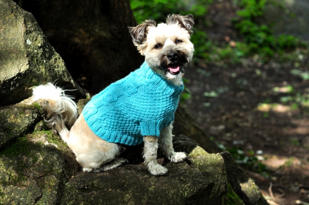 Dog Jumpers 050